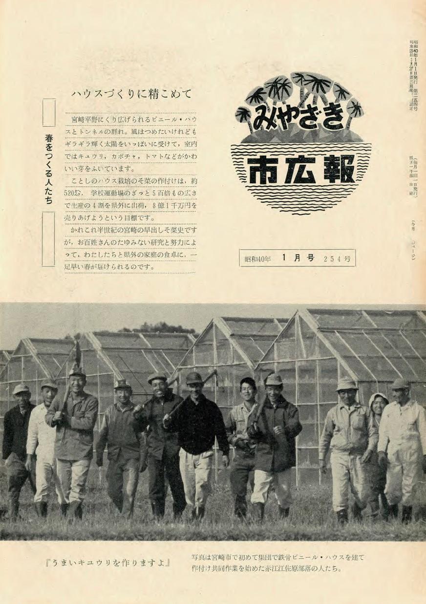 みやざき市広報 254号 1965年1月号の表紙画像